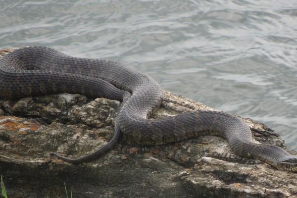snake on log